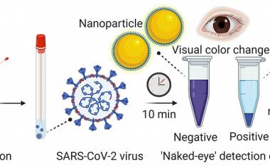 Nanotechnology provides rapid visual detection of COVID-19