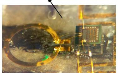 Implantable transmitter for wireless biomedical devices