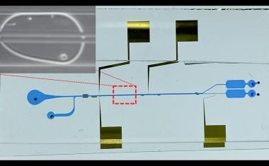 Microfluidic system may unravel how novel pathogens attack