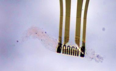 Adaptive microelectronics reshape independently