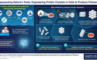 3D printing in-cell protein crystals