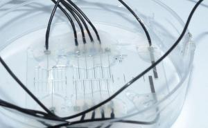 Nerve-on-a-chip improves neuroprosthetics
