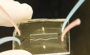 Using pancreas-on-a-chip for studying diabetes