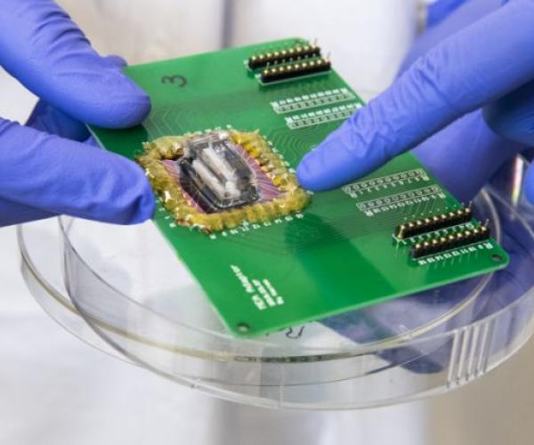 Scientists model heart attack on a chip