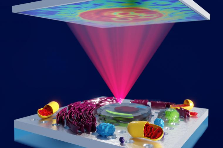 Concept art showing plasmon-enhanced phase microscopy. This new method will...