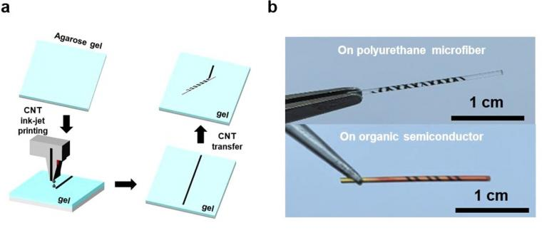 (a) Schematic of the rolling-transfer process of printed CNT microelectrodes....