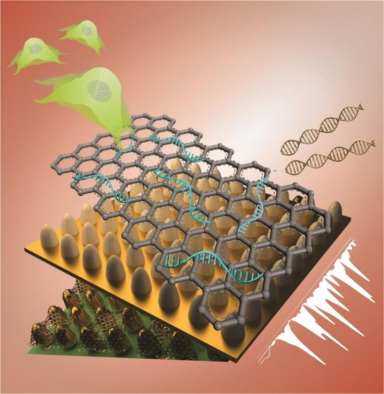 This unique biosensing platform consists of an array of ultrathin graphene...