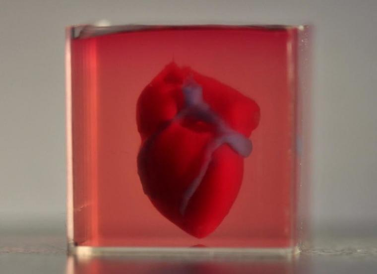 A 3D-printed, small-scaled human heart engineered from the patients own...