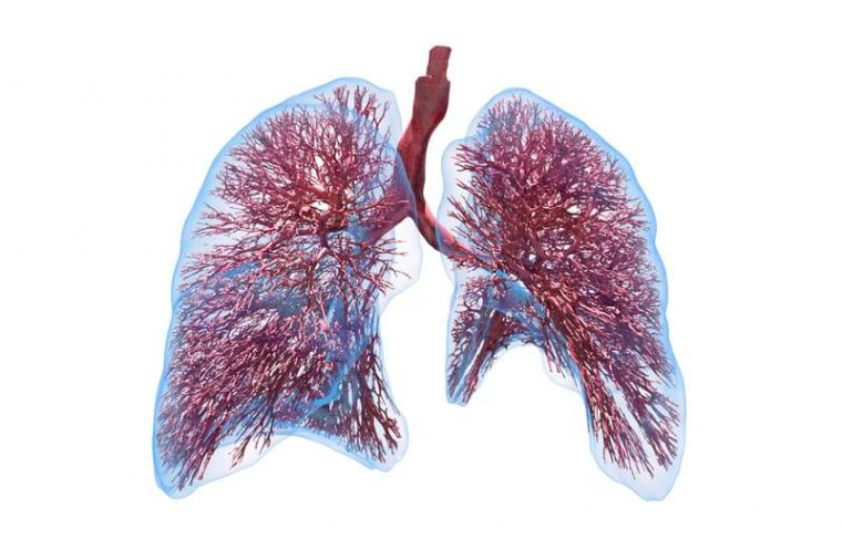 The computational lung model provides a better understanding of the...