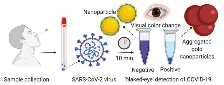 Nanotechnology Provides Rapid Visual Detection Of Covid 19 Tectales Tagging Medical Technology