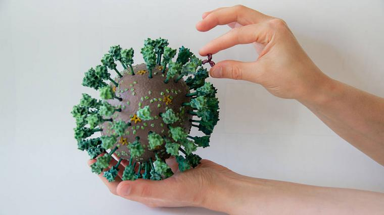 The 3D printed model of the SARS-CoV-2 corona virus and an antibody in the...